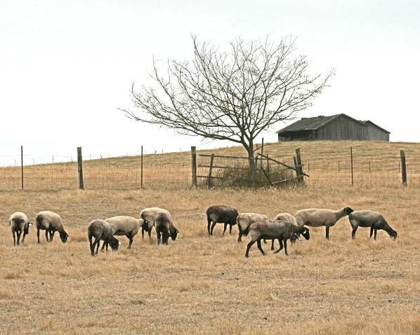 Pastoral Scene - ID: 2244418 © Claudia/Theo Bodmer