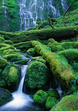 Moss and Water