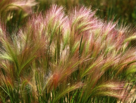 Prettiest Grass I have ever seeen