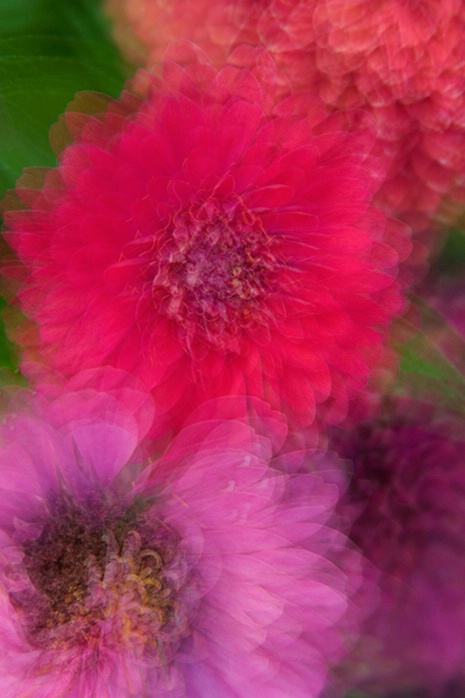 Flower Impressions 01 6-8-06 - ID: 2269148 © Robert A. Burns