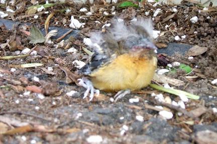 i saved this little birdie