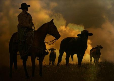 Cowboy 123
