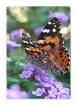 Butterfly in Colo...
