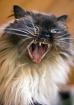 One Pissed Cat!
