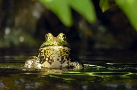 Frog Interrupted