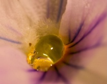 Crying Flower