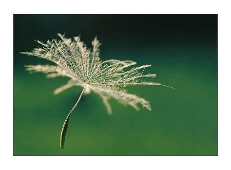 seed wanderer