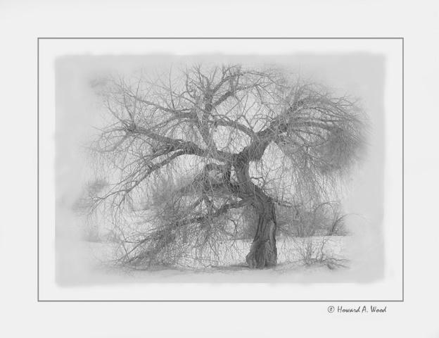 Tree-White Sands