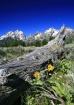 Deadwood Tetons