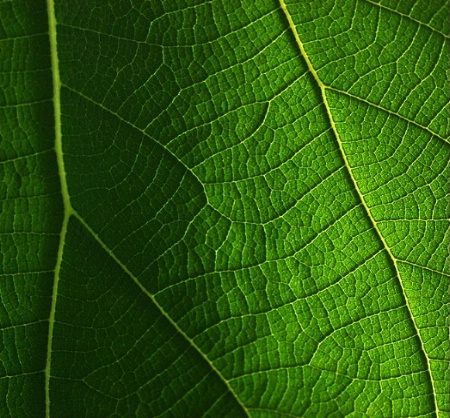 A Delicate World of a Leaf