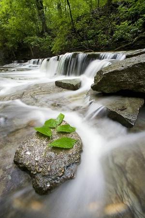 Sharonwoods Falls #5