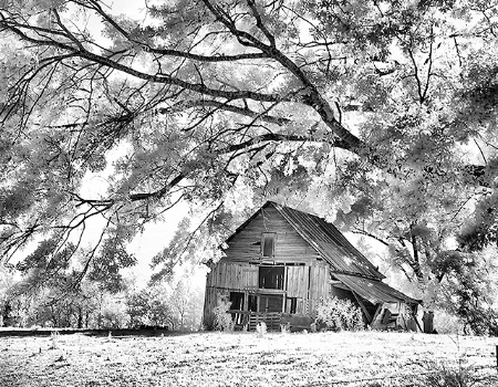 Old Barn on Highway 147, Infrared