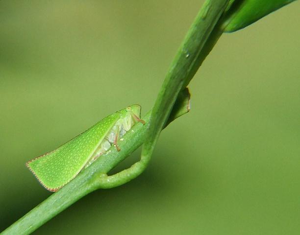 Leaf Guts
