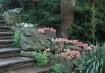 Rock Garden stair...