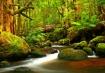 Nature's Brid...
