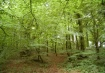 Trees By Emboroug...