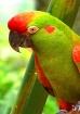 Tampa- parrot