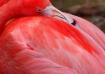 Tampa- Flamingo N...