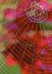 Spiders` Web