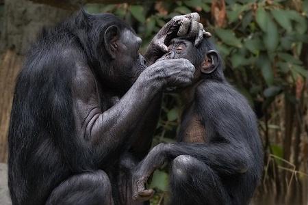 Bonobo Bathtime