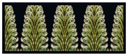 Sago Palm Frond Sprout Montage