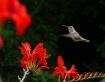 Hummingbirds Favo...