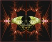 Quantum Butterfly