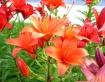 Burlington Flower...