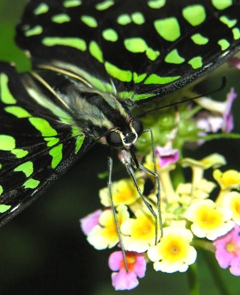 Butterfly Macro I