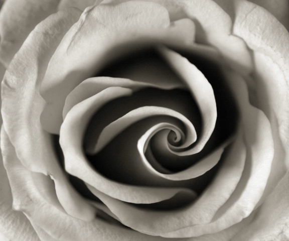 Rose curves (B&W)