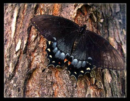 Butterfly & Tree