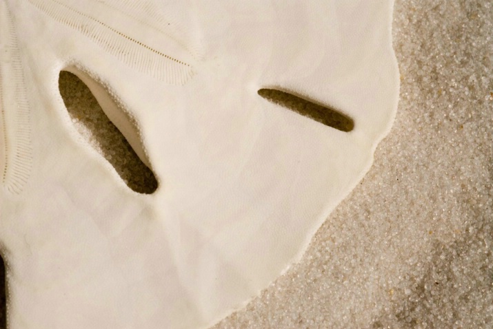 sand dollar - ID: 2427253 © Sibylle Basel