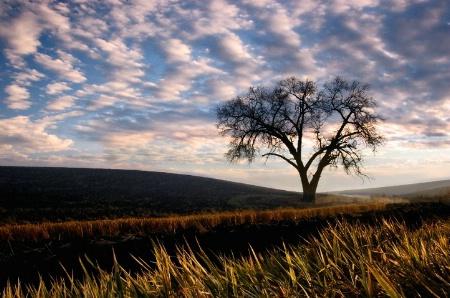 Lone Palouse Tree in Fall