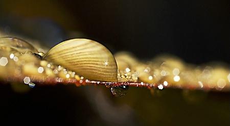 Nice Drop