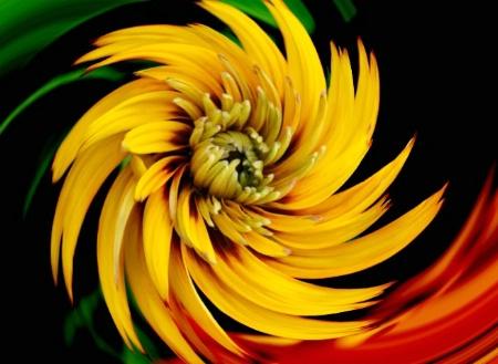 Floral Twirl