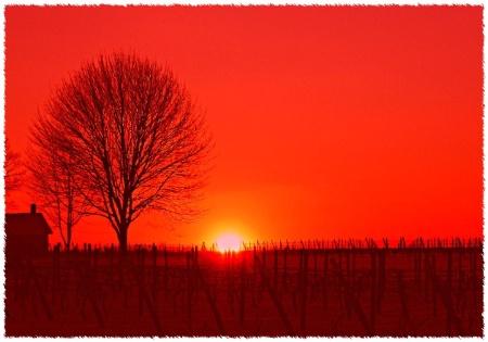 L.I. Vinyard @ Sunset