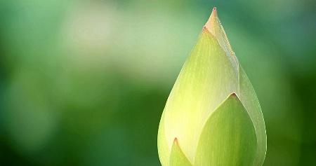 Green Aglow