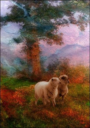 Victorian Sheep