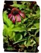 flower a la sipho