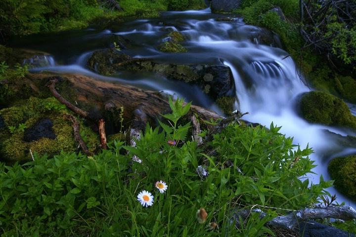 Peaceful Mountain Brook
