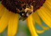 Pass the Pollen P...