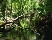 A Streams Road Ne...