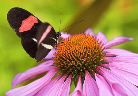 Butterfly Macro 6