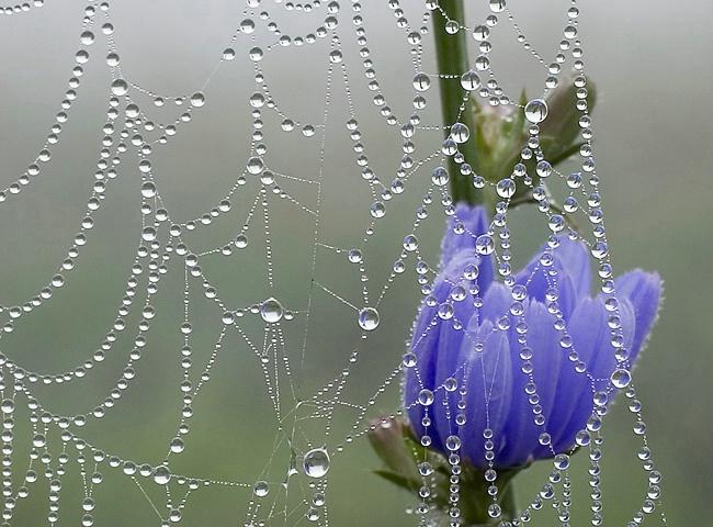Mist Creation