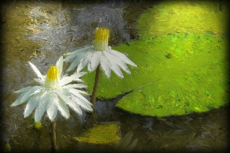 Water Lillies (repainted, blurred edge added and t