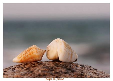 Shells Whisper !!