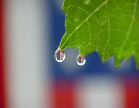 Wet  Glory