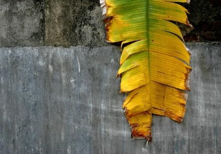Sri Lankan Palm
