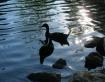 Ducks on sparklin...