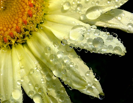 Sunny Shower